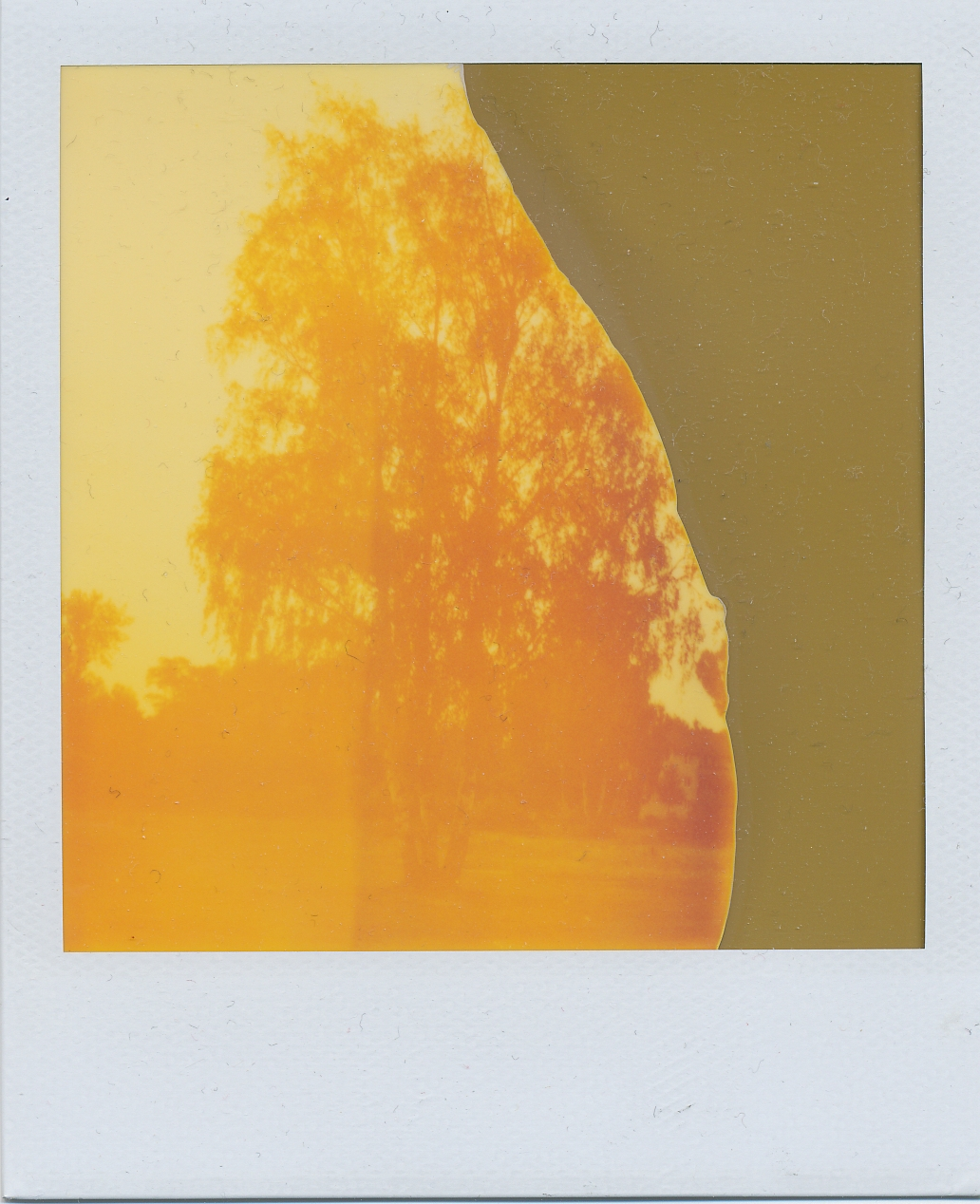 Polaroid instant image from an expired integral pack with heavy colour cast